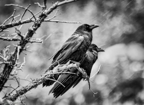 les oiseaux.jpg
