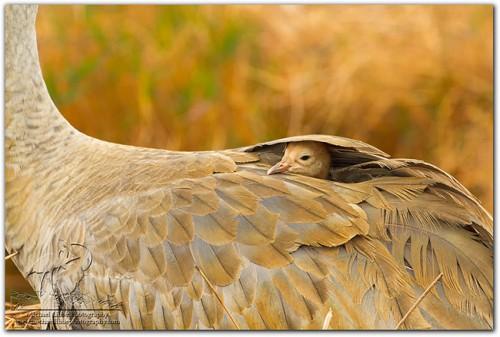 droh_baby_bird.jpg