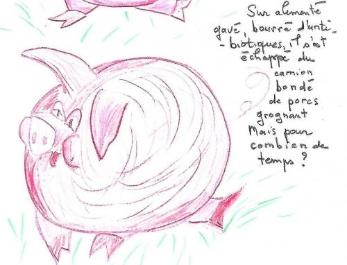 porc (3).jpg