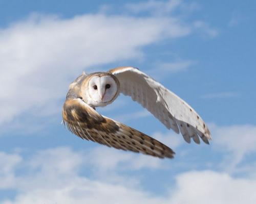 droh-owl-dan-weisz.jpg