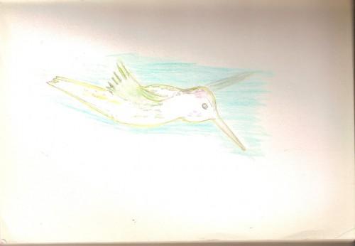 colibrideux0001.jpg