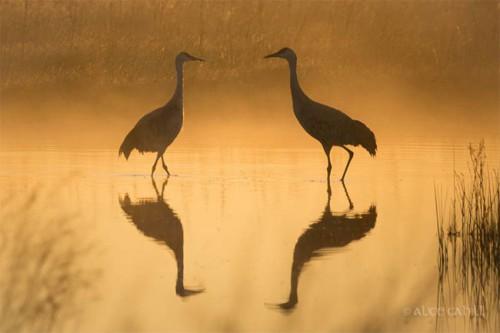 droh_two_birds.jpg