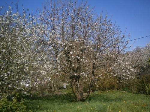 arbreblanc.jpg